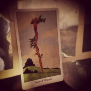 Padmes Card of the Day Ace of Wands