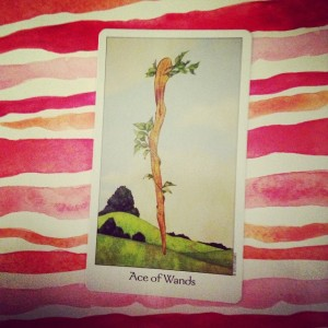 Ace of Wands Padmes Card of the Day
